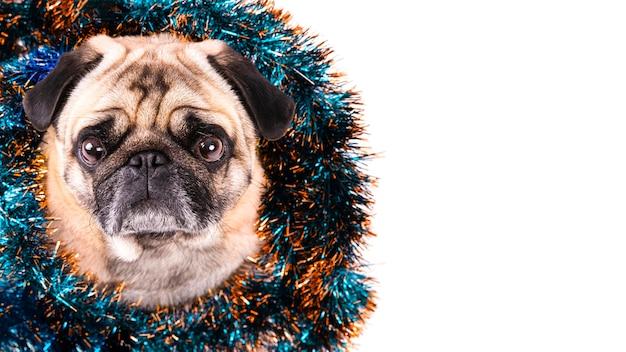 Seitenansichthund mit weihnachtsdekorationen auf seinem hals Kostenlose Fotos