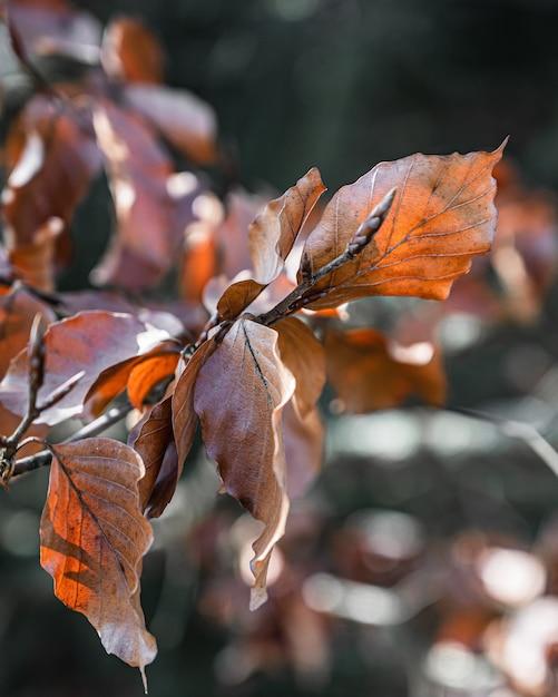 Selektive fokusansicht der nahaufnahme eines erstaunlichen astes mit orangefarbenen blättern unter sonnenlicht Kostenlose Fotos