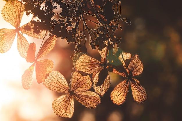 Selektiver fokus auf blumenblatt der trockenen hortensieblume mit naturgrünhintergrund Premium Fotos