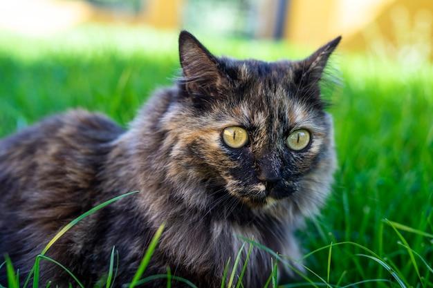 Selektiver fokusschuss der nahaufnahme einer katze, die auf dem gras sitzt Kostenlose Fotos