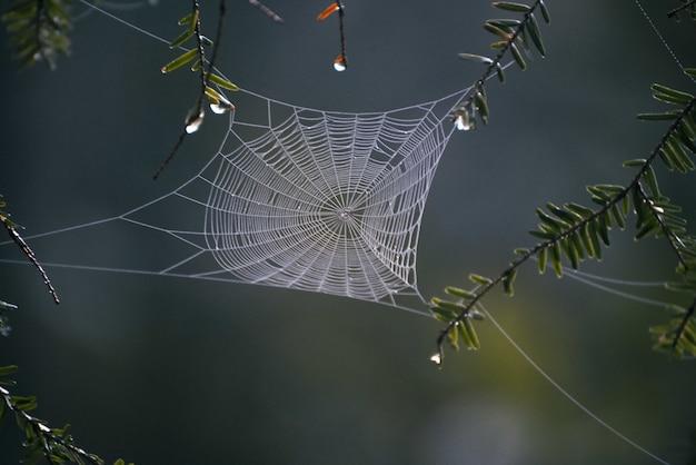 Selektiver fokusschuss der nahaufnahme eines spinnennetzes in der mitte des waldes Kostenlose Fotos
