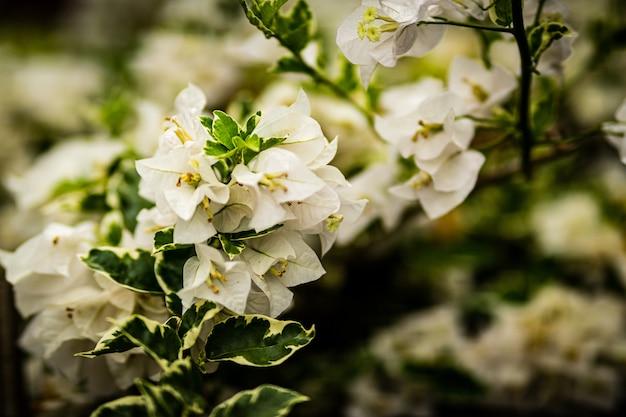 Selektiver fokusschuss der schönen kirschblütenblumen Kostenlose Fotos