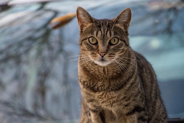 Selektiver fokusschuss einer braunen katze, die für die kamera aufwirft Kostenlose Fotos