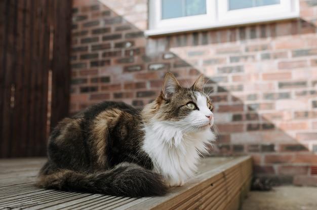 Selektiver fokusschuss einer braunen und weißen katze, die auf boden sitzt und nach vorne schaut Kostenlose Fotos