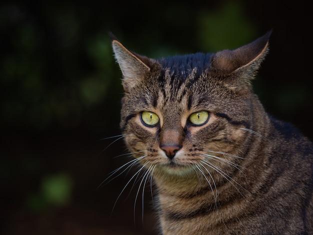 Selektiver fokusschuss einer entzückenden katze mit grünen augen Kostenlose Fotos