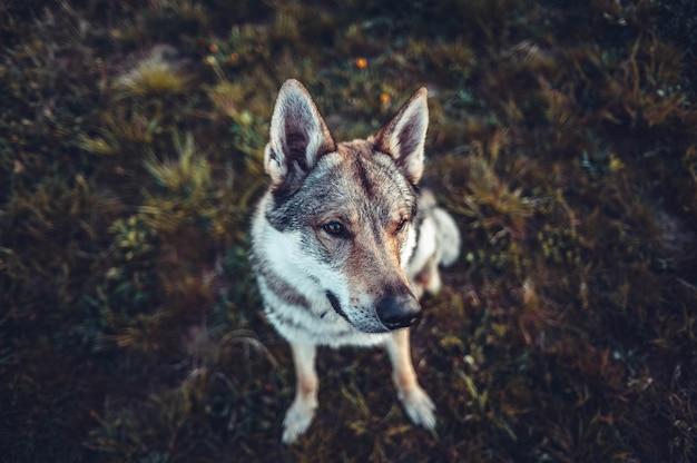 Selektiver fokusschuss eines braunen und weißen hundes, der auf dem boden sitzt und nach links schaut Kostenlose Fotos