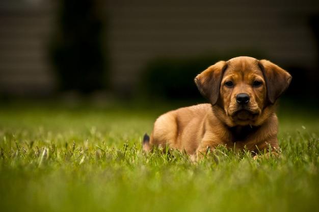 Selektiver fokusschuss eines entzückenden hundes, der auf einer wiese liegt Kostenlose Fotos