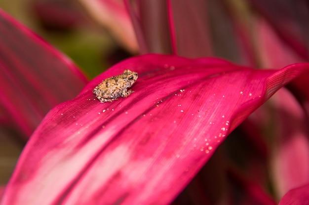 Selektiver fokusschuss eines kleinen frosches, der auf einer rosa blattpflanze mit einem unscharfen hintergrund ruht Kostenlose Fotos