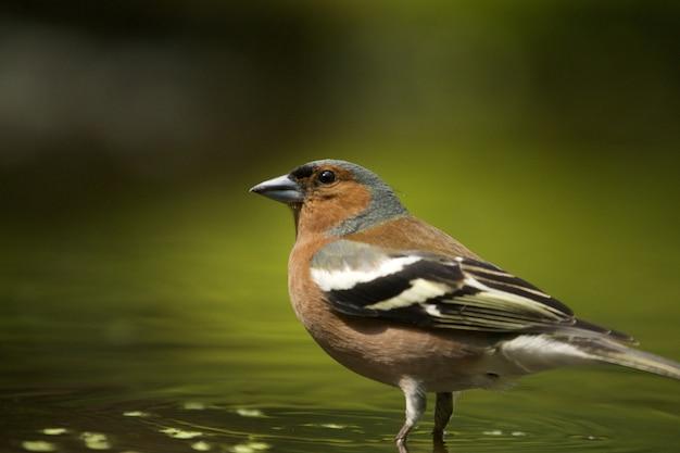 Selektiver fokusschuss eines niedlichen finkenvogels Kostenlose Fotos