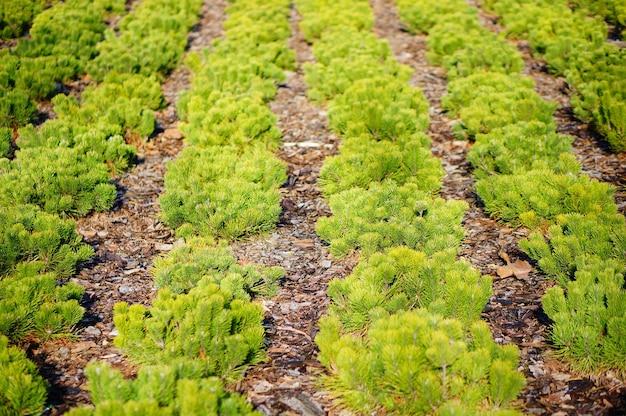 Selektiver fokusschuss von grünen pflanzen in einer linie Kostenlose Fotos