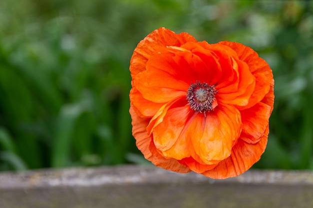 Selektiver nahaufnahmefoto der nahaufnahme einer blühenden orange blume im grün Kostenlose Fotos