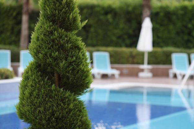 Service bei der landschaftsgestaltung und instandhaltung von pflanzen. Premium Fotos