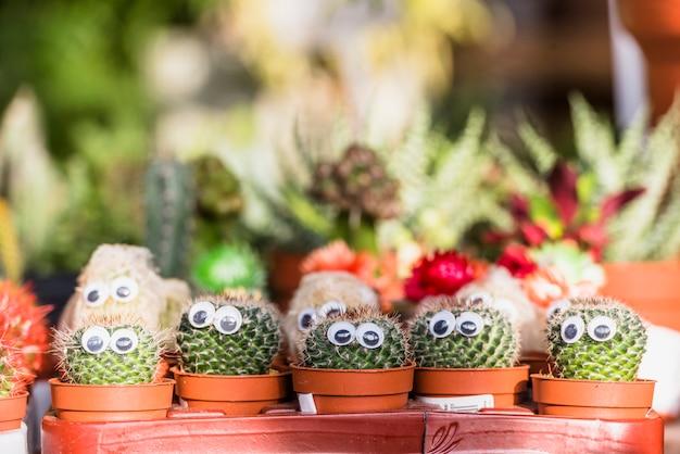 Set kakteen mit dekorativen augen in töpfen Kostenlose Fotos