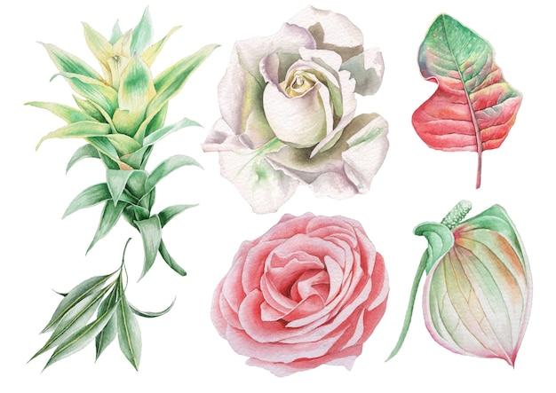 Set mit aquarellblumen und blättern. rose. bromelie. anthurium. handgemalt. Premium Fotos