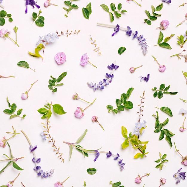 Set purpurrote blumen und grüne blätter Kostenlose Fotos
