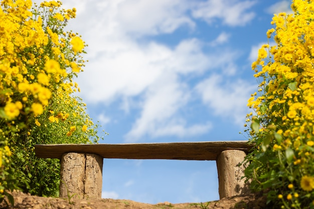 Setzen sie unter gelbem chrysanthemenfeld mit den weißen wolken und dem hintergrund des blauen himmels auf die bank. Premium Fotos