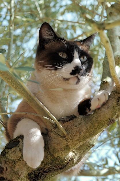 Siamesische katze in einem baum Premium Fotos