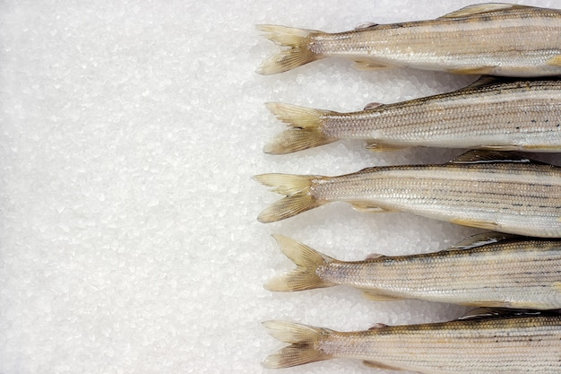 Sibirischer flussfisch grayling auf weißem großem kristallsalz Premium Fotos