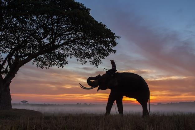 Silhouette der elefanten in thailand bei sonnenaufgang Premium Fotos