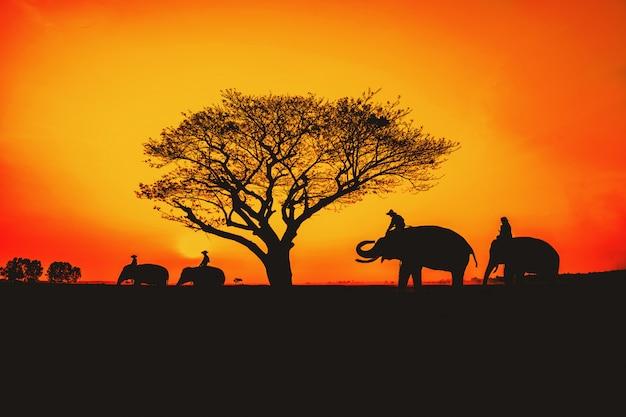 Silhouette, lebensstil von menschen und elefanten. Premium Fotos