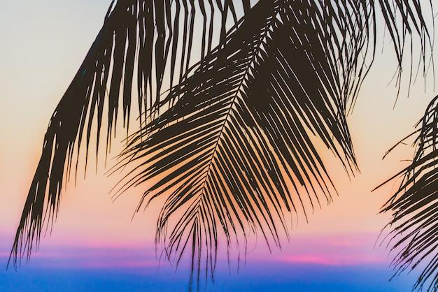 Silhouette palme Kostenlose Fotos