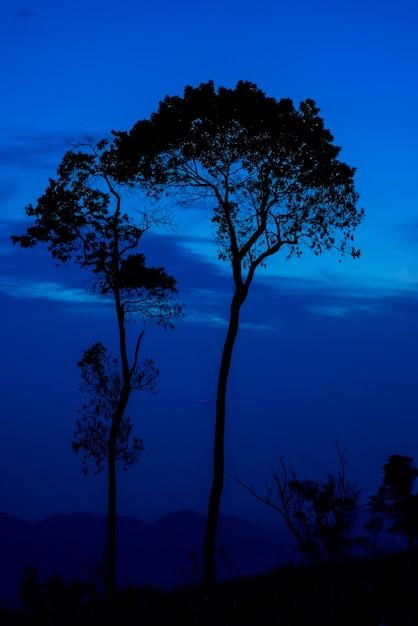 Silhouettieren sie baumsonnenuntergang oder -sonnenaufgang auf berg mit blauem himmel Premium Fotos