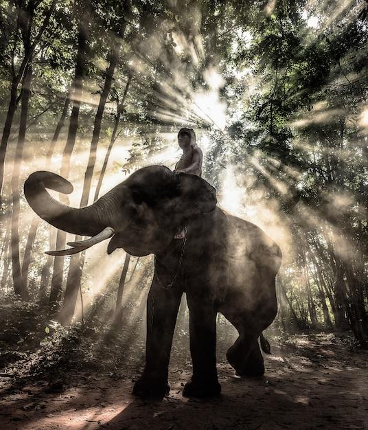 Silhouettieren sie elefantentrekking durch in den strahlen des lichtes, thailand. Premium Fotos