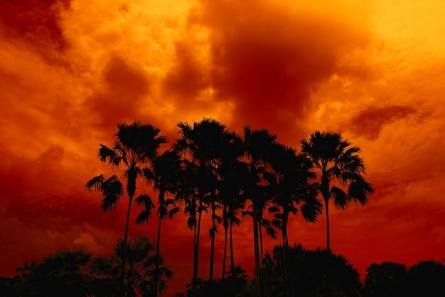 Silhouettieren sie hohe palmen im dunkelroten orange nächtlichen himmel Premium Fotos