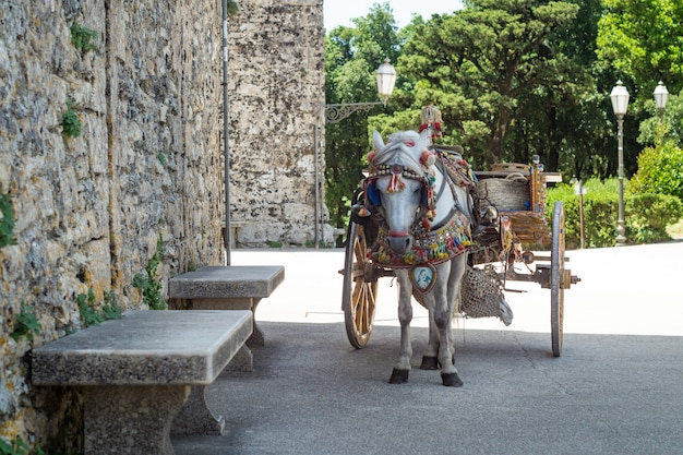 Sizilianischer wagen mit schimmel. Premium Fotos