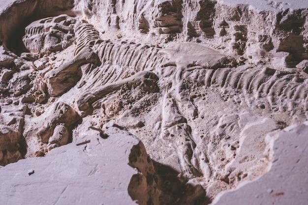 Skelett des dinosauriers. tyrannosaurus rex-simulatorfossil im grundstein. Premium Fotos