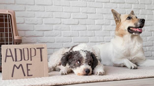 Smiley-hunde in der nähe adoptieren mich banner Kostenlose Fotos