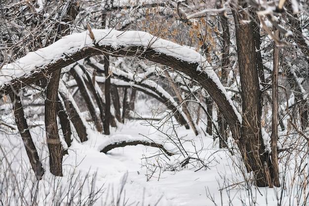 Snowy-weg unter baumasten im parklandabschluß oben. Premium Fotos