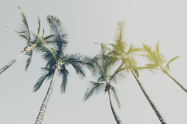 Sommer reise urlaub konzept. schöne palmen auf blauem himmel hintergrund. toning Kostenlose Fotos