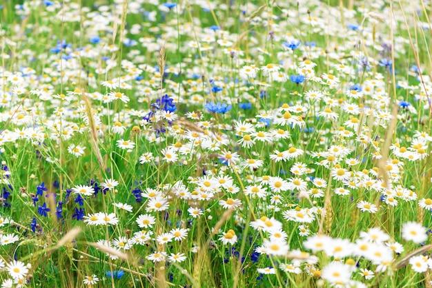 Sommer wilde blumen auf dem feld Premium Fotos