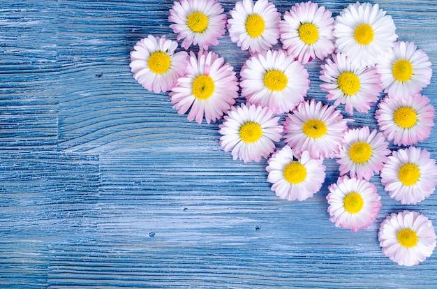 Sommerblumen auf blauem holz. Premium Fotos