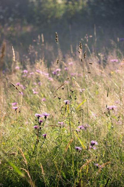 Sommerwiesengras und -blumen Premium Fotos