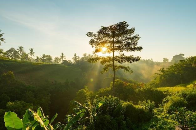 Sonnenaufgang über bali dschungel Kostenlose Fotos