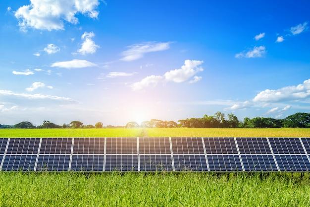 Sonnenkollektoren auf goldener landschaft des getreidefelds und des reises gegen blauen himmel mit wolken. Premium Fotos