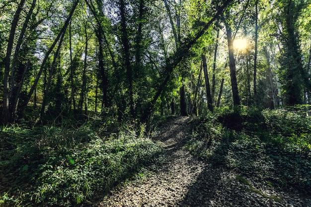 Sonnenlicht, das durch die äste scheint Premium Fotos