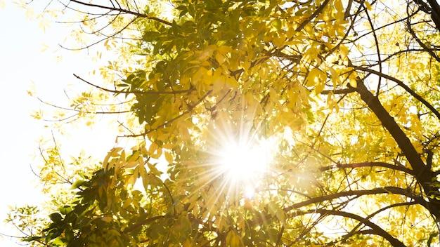 Sonnenlicht, das durch herbstbäume überschreitet Kostenlose Fotos