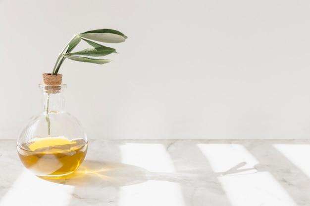 Sonnenlicht, das über den zweig innerhalb der glasflasche auf dem boden fällt Kostenlose Fotos