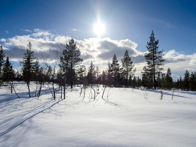 Sonnenlicht über einem schönen winterwald bedeckt vom schnee in finnland Premium Fotos