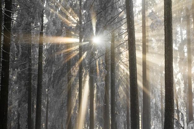 Sonnenstrahlen brechen durch den kalten nebel und schneebedeckte bäume. Premium Fotos