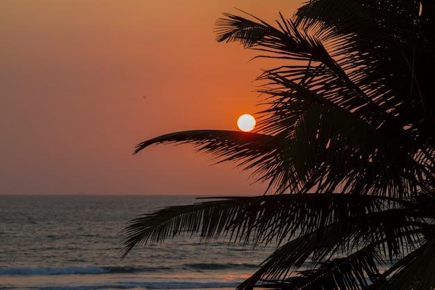 Sonnenuntergang am ufer des indischen ozeans Premium Fotos