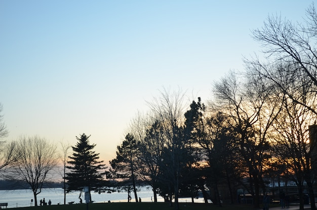 Sonnenuntergang hinter den bäumen mit torontos bucht im hintergrund Premium Fotos
