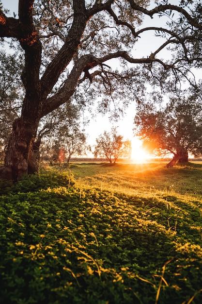 Sonnenuntergang in der landschaft mit vielen bäumen in einer wiese Premium Fotos