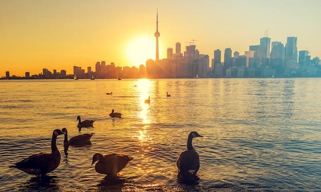 Sonnenuntergang über toronto stadt Premium Fotos