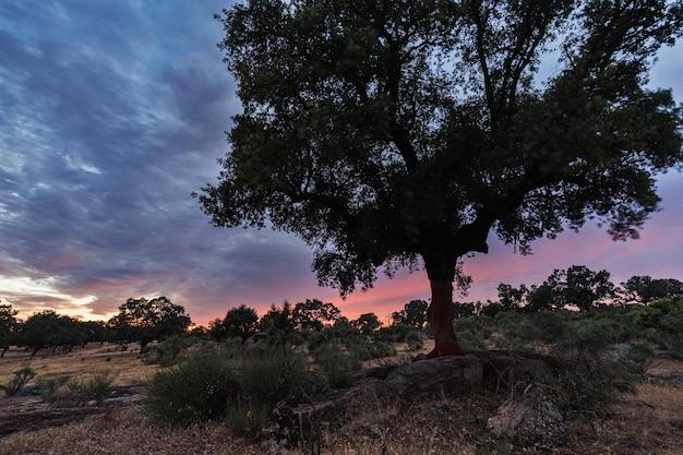 Sonnenunterganglandschaft nahe guijo de galisteo. extremadura. spanien. Premium Fotos