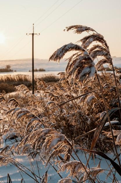 Sonnenuntergangsansicht des verschneiten winters Kostenlose Fotos