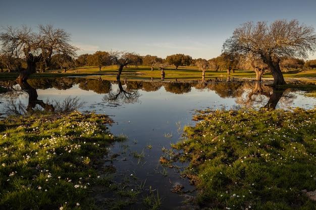 Sonnenuntergangslandschaft in einer lagune nahe arroyo de la luz. extremadura. spanien. Premium Fotos